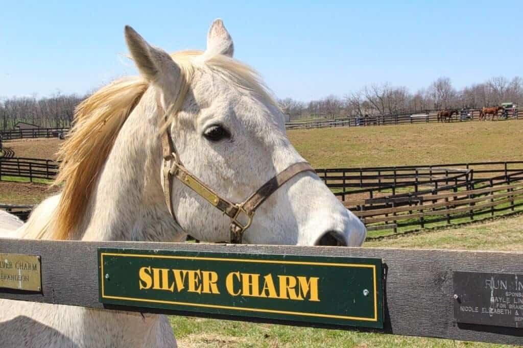 A white horse looks over a fence at Old Friends at Dream Chase Farm.