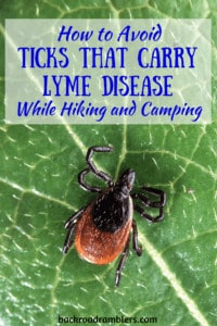 A close-up of a deer tick on a leaf. Caption reads: How to avoid ticks that carry lyme disease when hiking and camping.