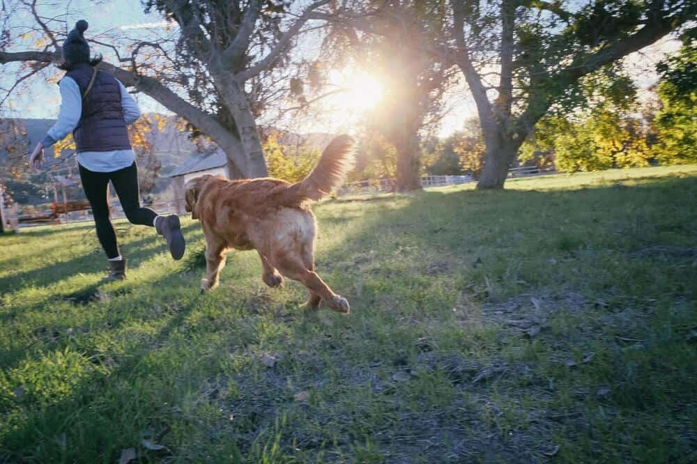 A woman runs through the grass with a golden retriever during the sunset.