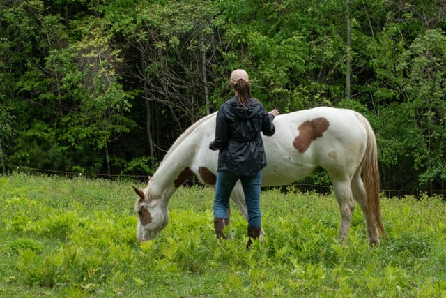 Maya, the painted mare, standing in a field with a young woman.