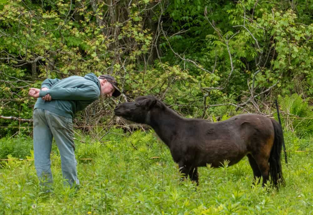 Tula, the mini horse, nuzzles one of her family members in the field.