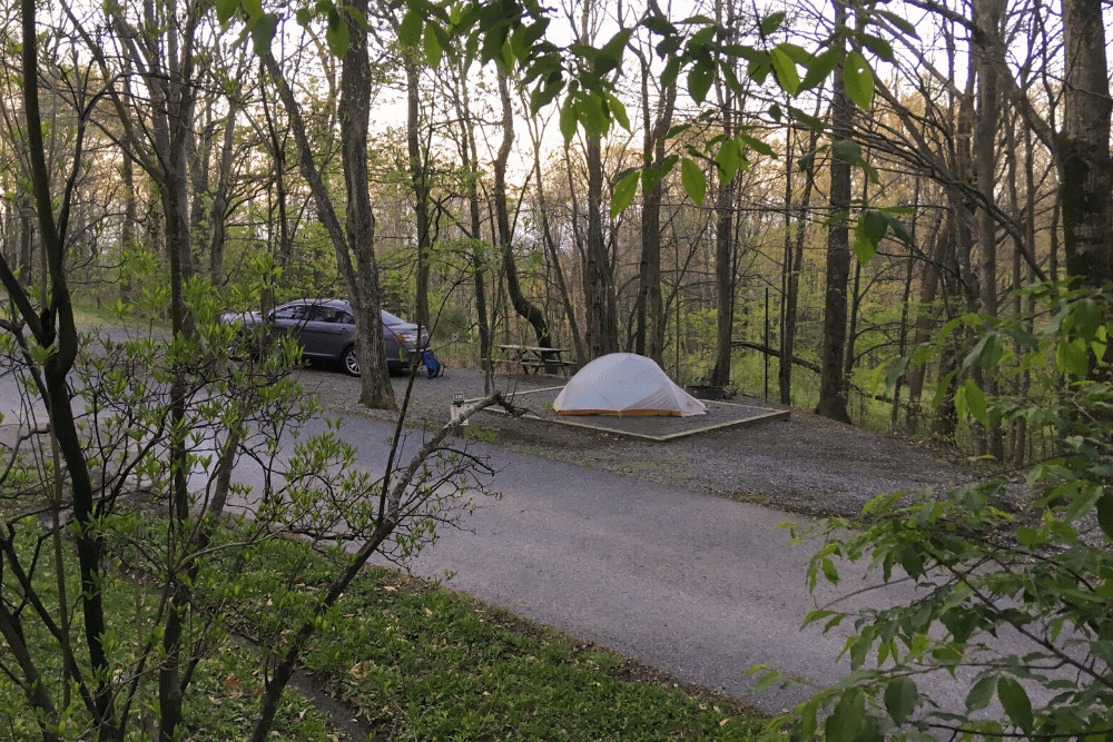 A wooded campsite in Hickory Ridge Campground, Virginia.