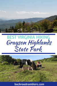 The wild ponies in Grayson Highlands State Park. Caption reads: Best Virginia Hiking - Grayson Highlands state Park.
