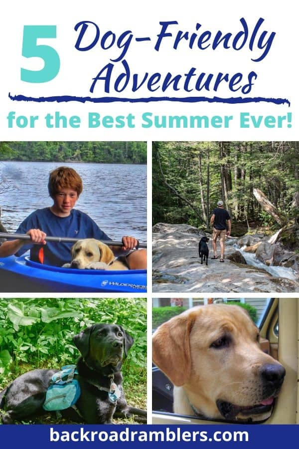 A collage of summer photos with dogs enjoying the outdoors. Caption reads: 5 Dog-Friendly Adventures for the best summer ever