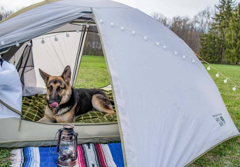 A German Shepherd dog lies inside a small tent in a field.