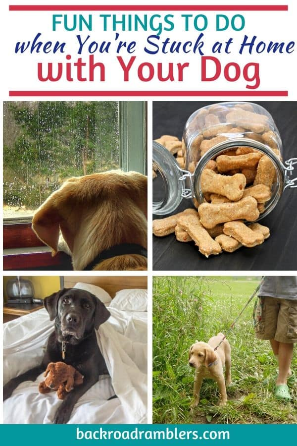 A collage of dog photos. Caption reads: Fun things to do when you're stuck at home wit your dog.