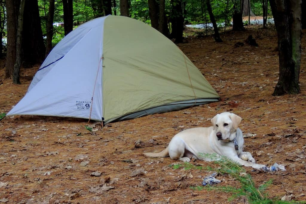 A yellow lab lies outside of a small tent during a dog friendly camping trip.