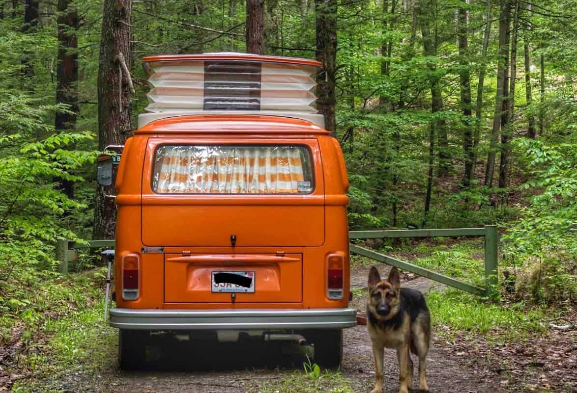 A German Shepherd dog stands next to an orange campervan.
