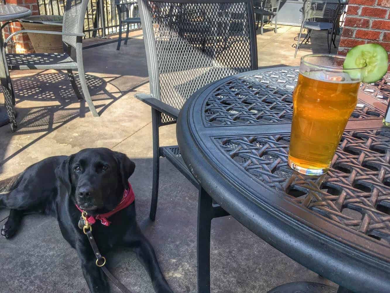 A black lab lies on the patio of a dog-friendly restaurant.