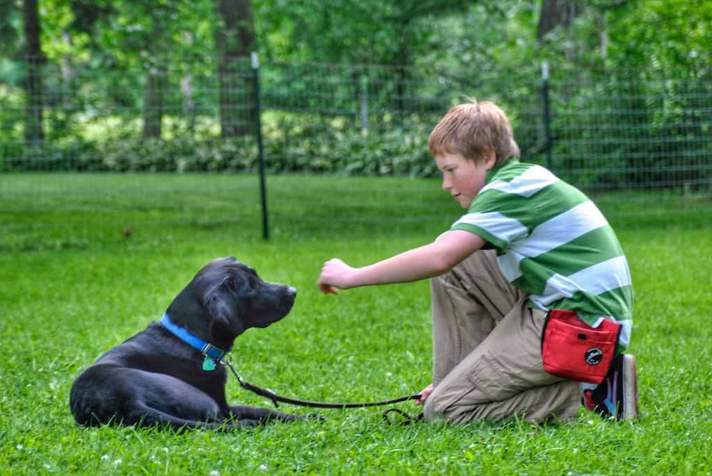 A boy sits in the grass looking at a black Labrador puppy.