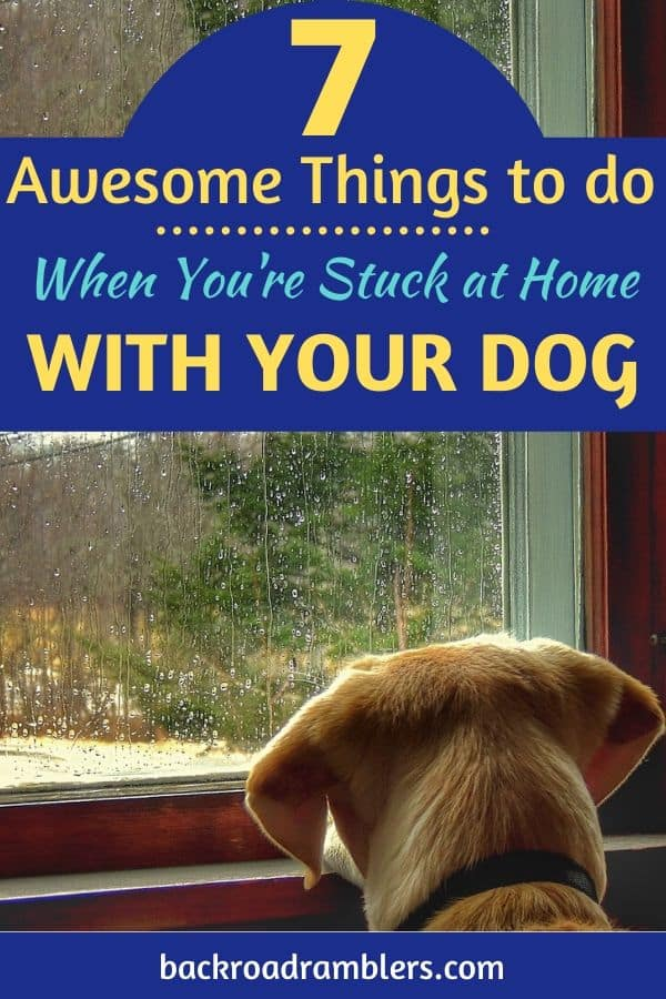 A dog looks out the window at a rainy day. Caption reads: 7 Awesome Things to do When you're stuck at home with your dog.
