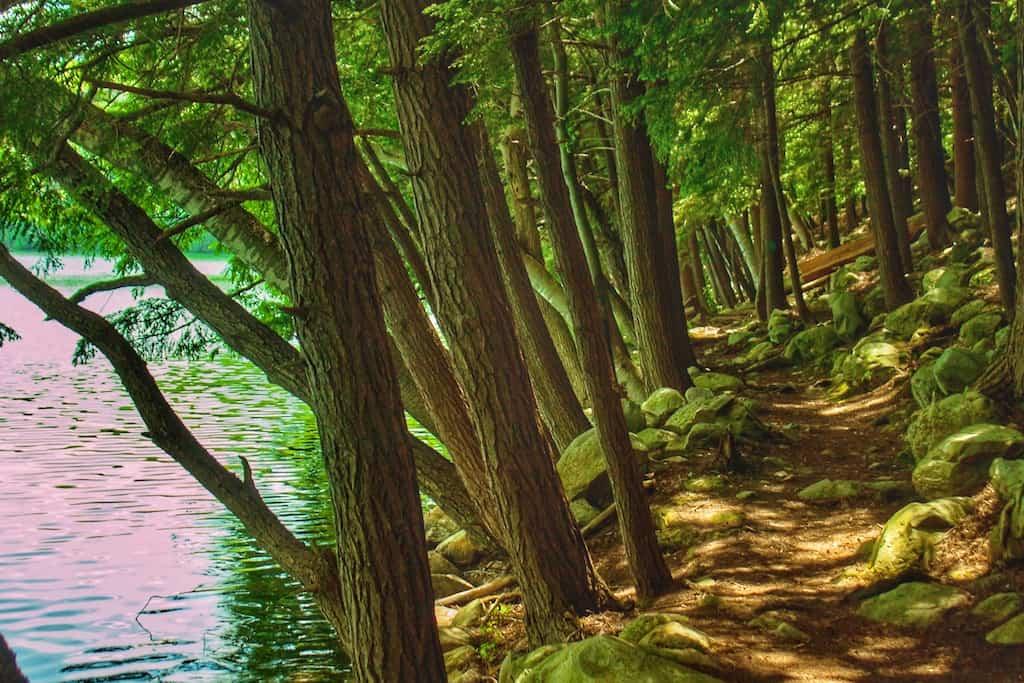The hiking trail around Emerald Lake