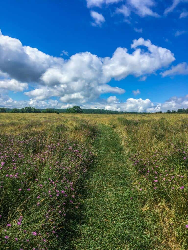 The meadow path in Taconic Mountains Ramble State Park