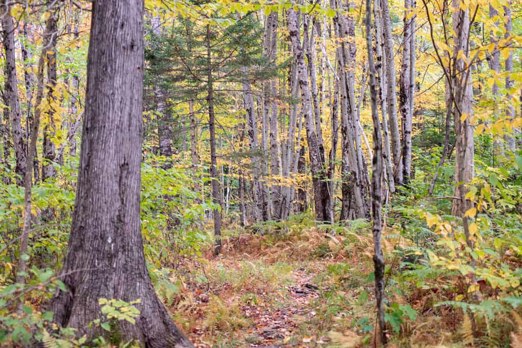 A woodland trail in Brighton State Park, Vermont