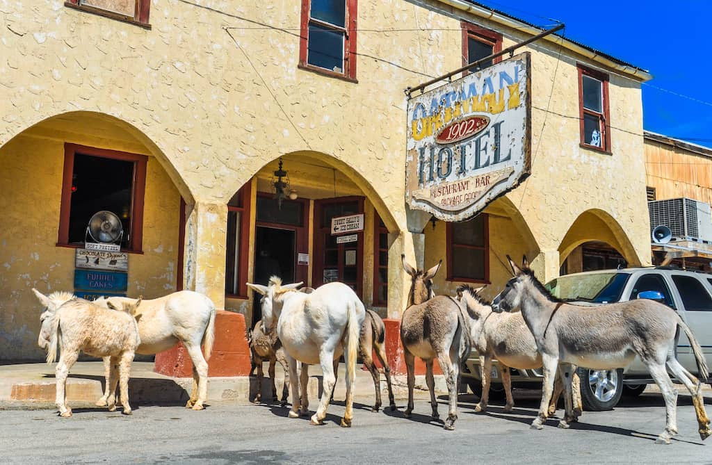 Burros congregate in front of the Oatman Hotel