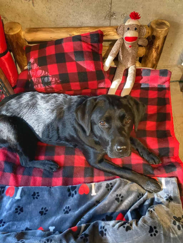 Buddy's Airbnb in Quechee Vermont