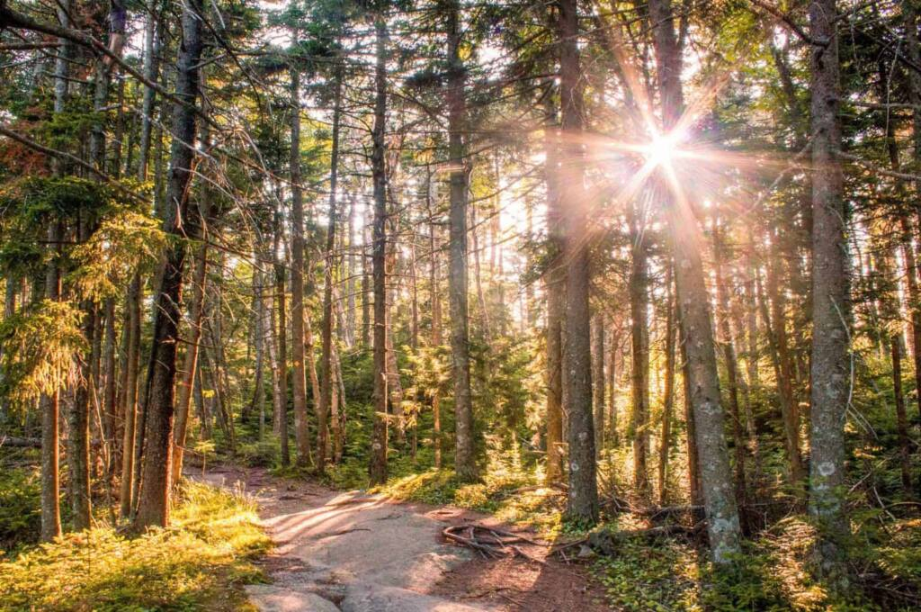 The summit trails at the top of Mt. Ascutney in Vermont