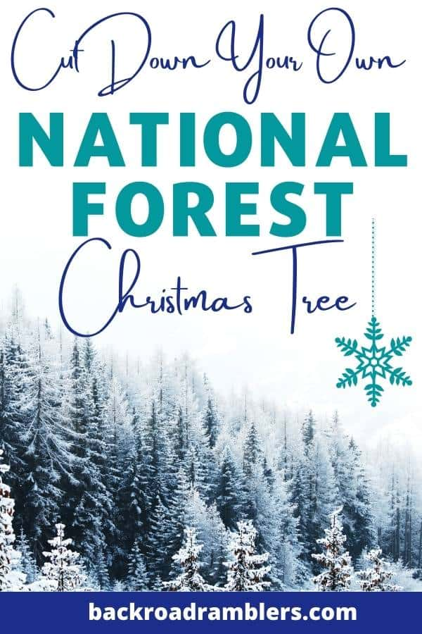A snowy spruce forest in the National Forest. Caption reads: Cut Your Own National Forest Christmas Tree