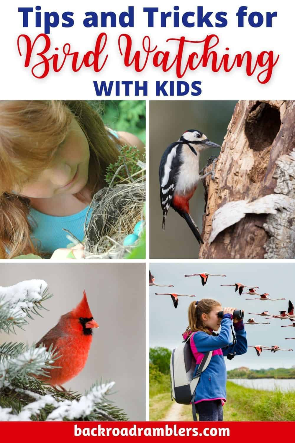 A collage of photos featuring kids watching the birds. Caption reads: Tips and Tricks for Bird Watching with Kids.