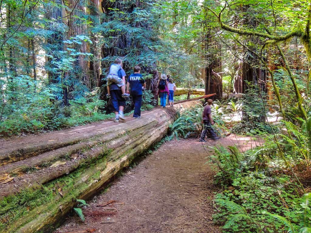 Hiking through the redwoods in Jedediah Smith Redwoods State Park.