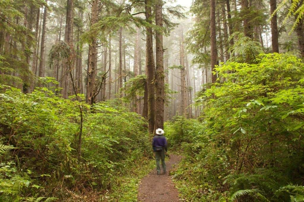 A man stands on a trail in Olympic National Park.