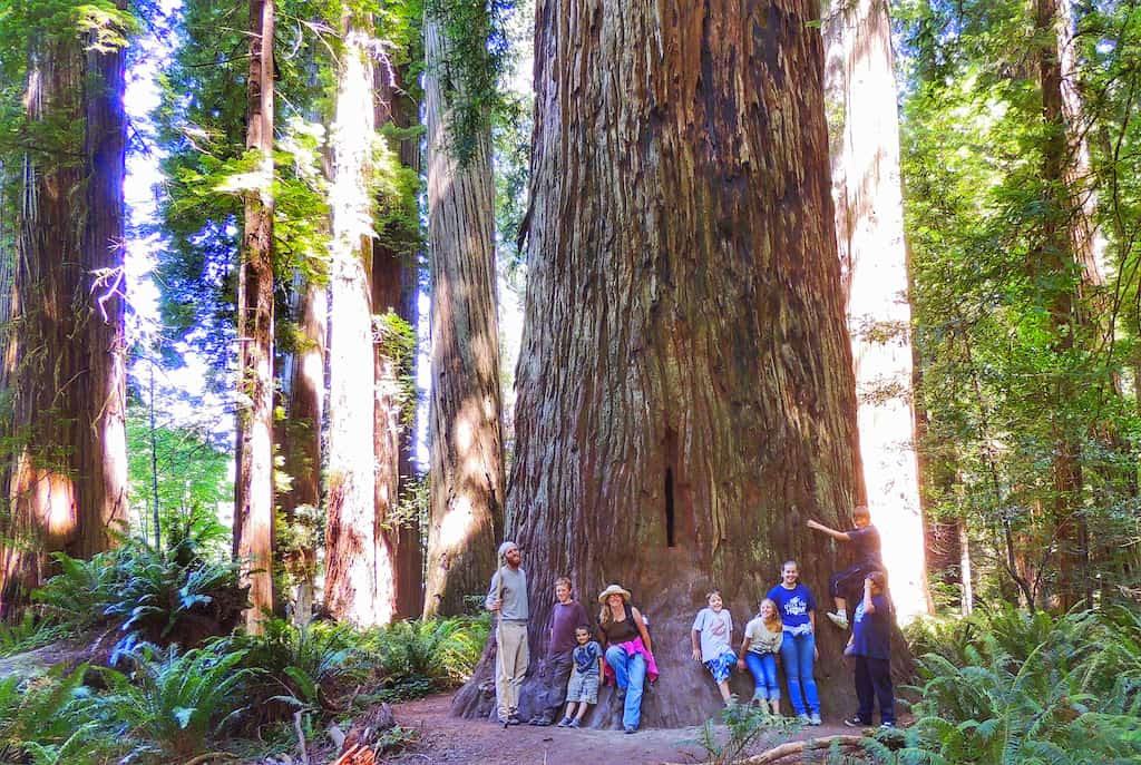 Our family and some friends leaning up against a redwood tree in California.
