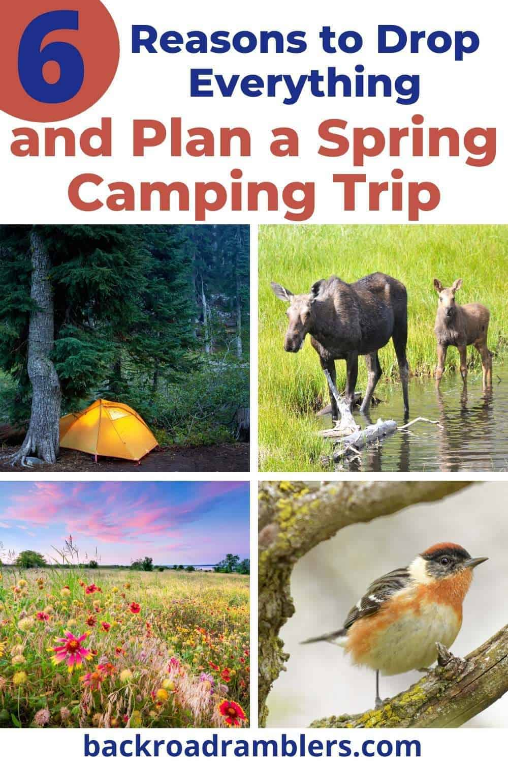 A collage of photos featuring a spring camping trip. Text overlay: 6 Reasons to Drop Everything and Plan a Spring Camping Trip.