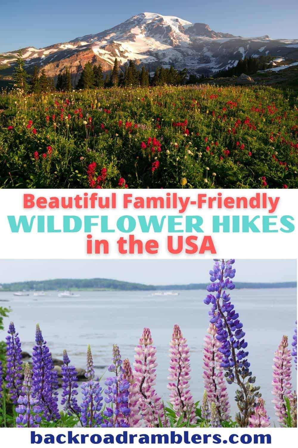 Two photos featuring wildflower hikes in the United States. Text overlay: Beautiful, family-friendly wildflower hikes in the USA.