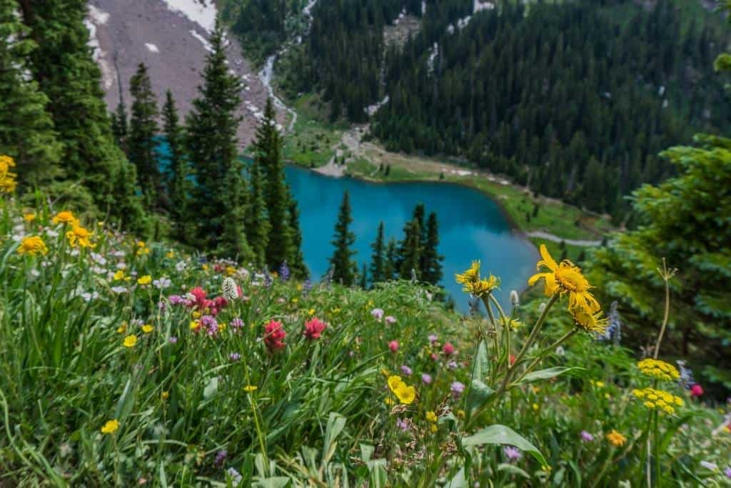 Blue Lake trail with wildflowers in Colorado.