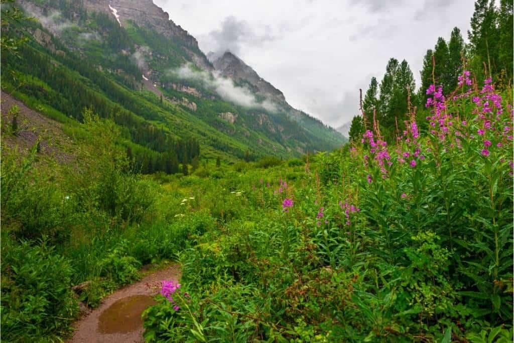 A wildflower trail through the Cascades in Washington.