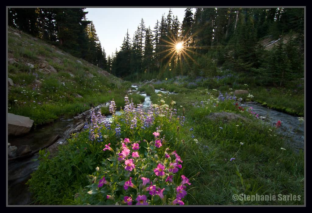 Wildflowers growing in Canyon Creek Meadows, Oregon.