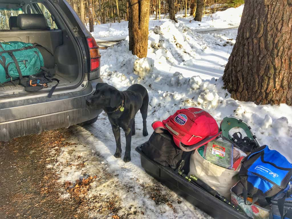 Flynn the labrador stands next to a sled full of travel gear on a winter road trip.