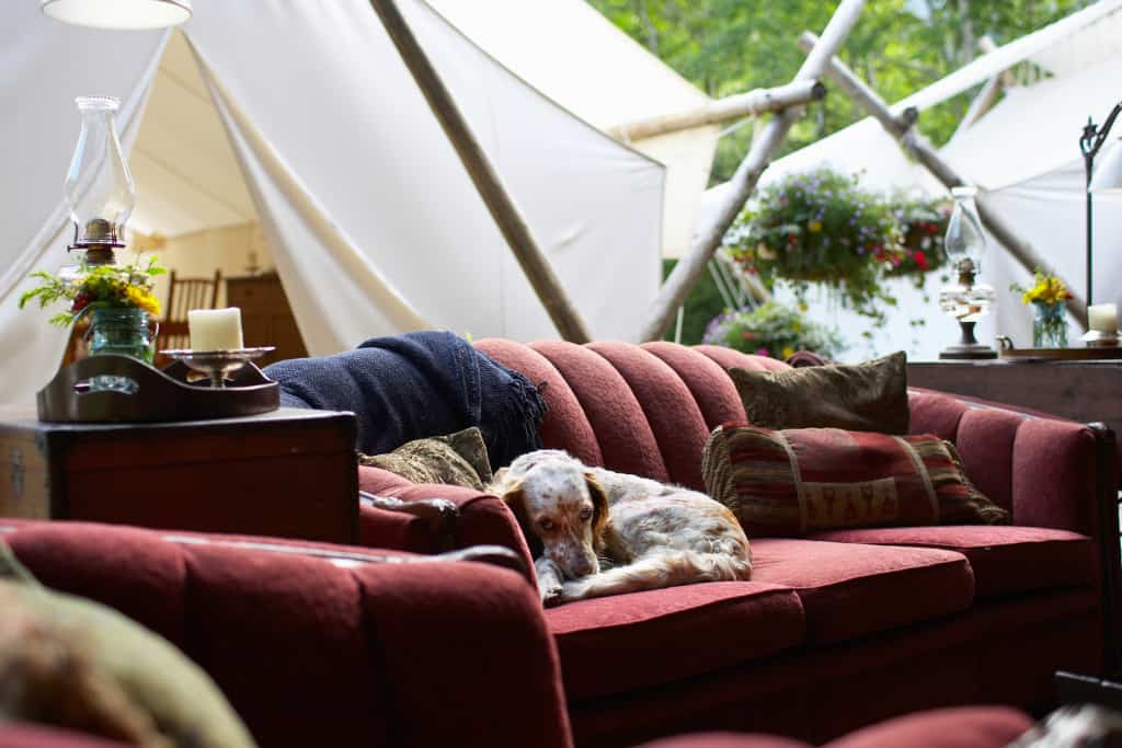 a young dog lies on an outdoor couch in front of a glamping tent.