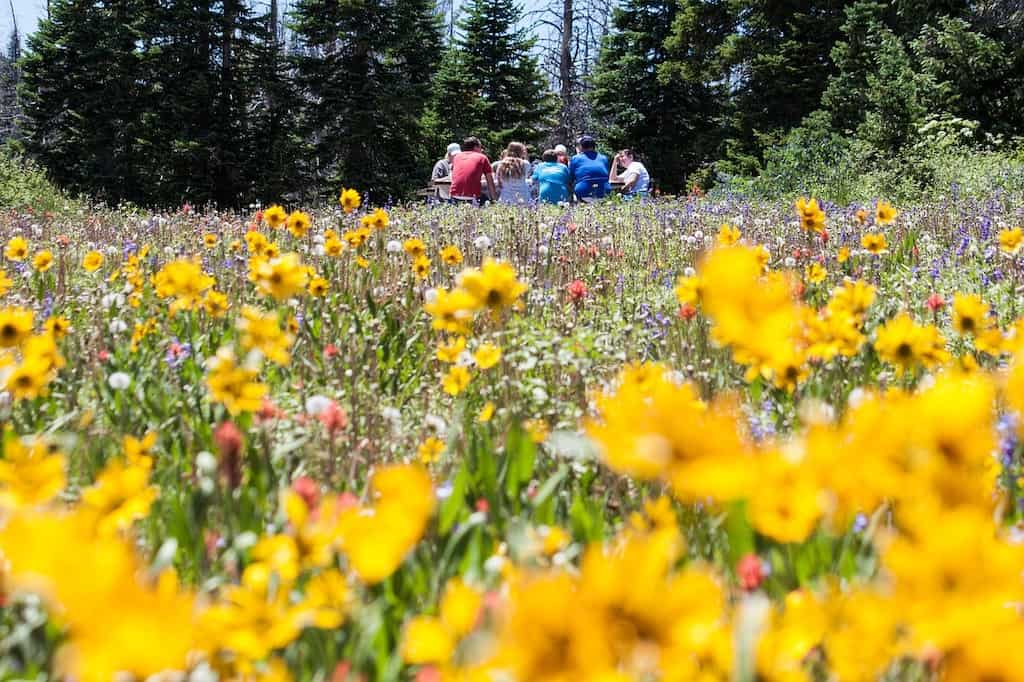 A family on a road trip picnic surrounded by wildflowers.