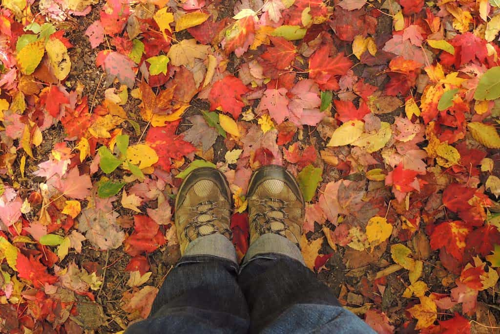 A pair of hiking boots on a trail covered with autumn leaves in the Berkshires.